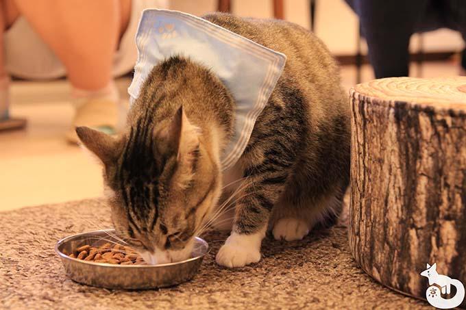 猫カフェTiME(タイム)の猫|