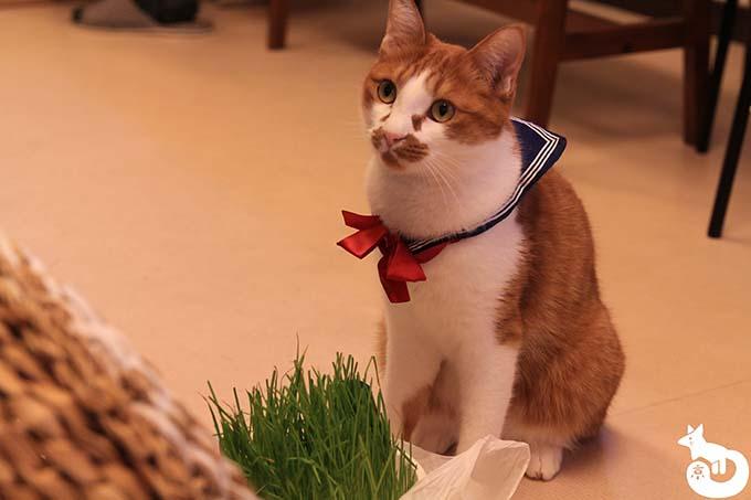 猫カフェTiME(タイム)の猫|ライ