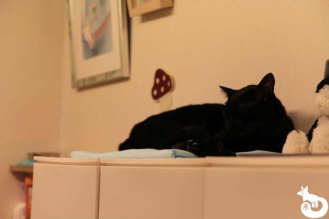 猫カフェTiME(タイム)の猫|蘭