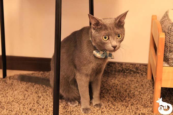 猫カフェTiME(タイム)の猫|トトロ