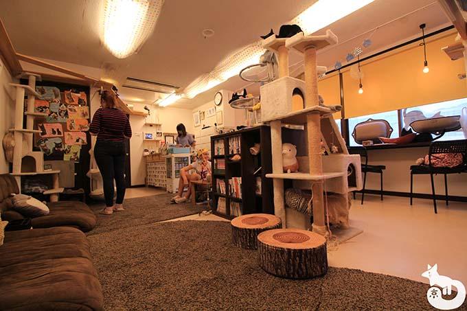 猫カフェTiME(タイム)の店内の様子|奥からの様子