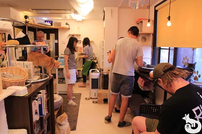 猫カフェTiME(タイム)の店内の様子|混雑状況