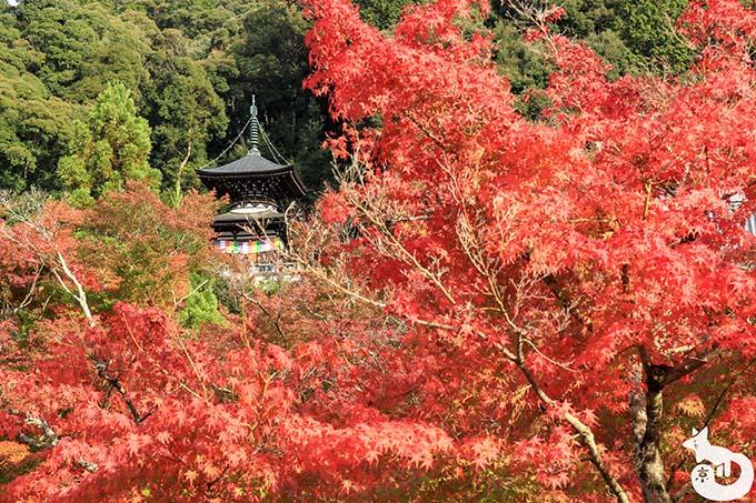 永観堂 多宝塔の紅葉