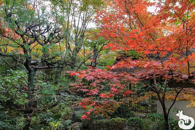 厭離庵 時雨亭周囲の紅葉