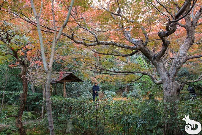 厭離庵 庭園の紅葉