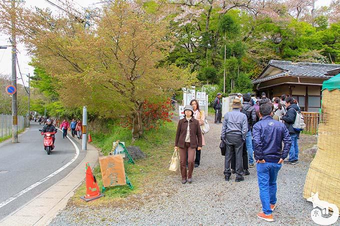 原谷苑の桜|受付の混雑状況