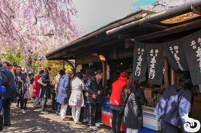原谷の桜|売店の混雑状況