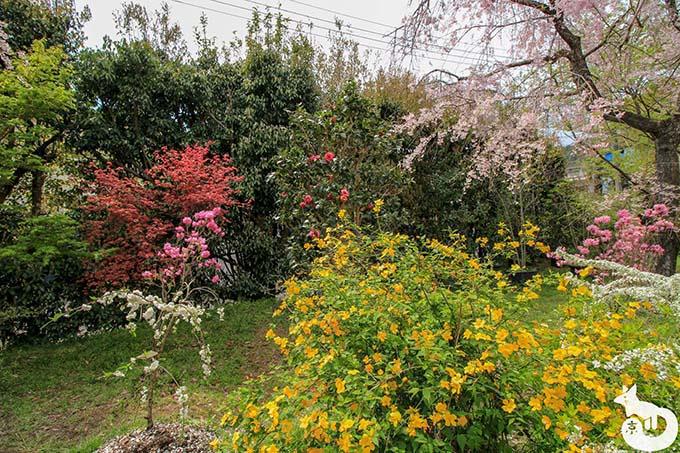 原谷苑の花