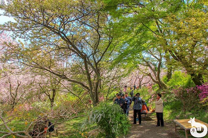原谷苑の新緑