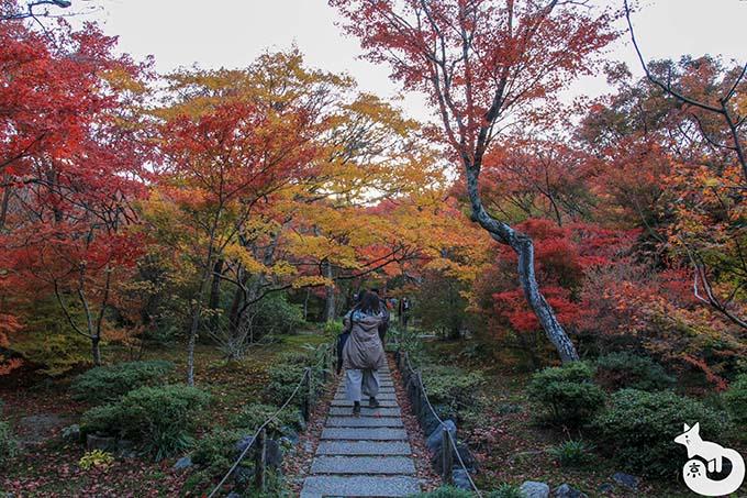 宝筐院 庭園(秋)
