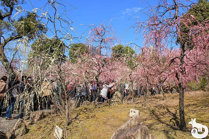 城南宮 しだれ梅と椿まつり|春の山