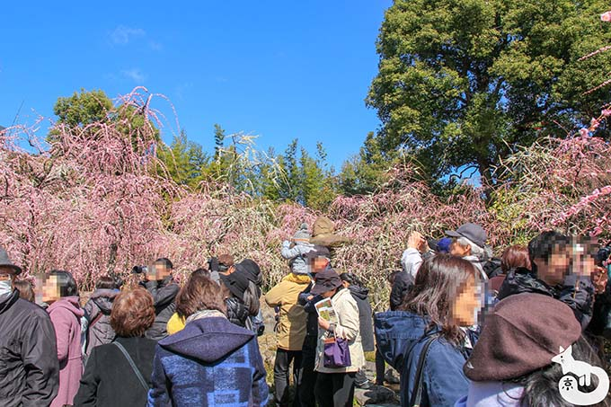 城南宮 しだれ梅と椿まつり|春の山の様子
