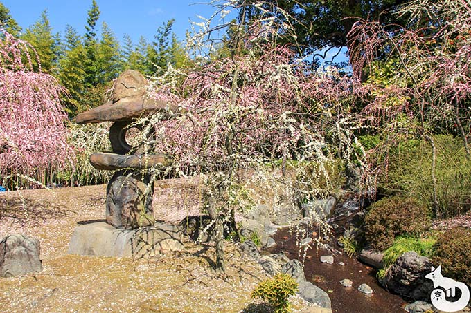 城南宮 しだれ梅と椿まつり|しだれ梅と川