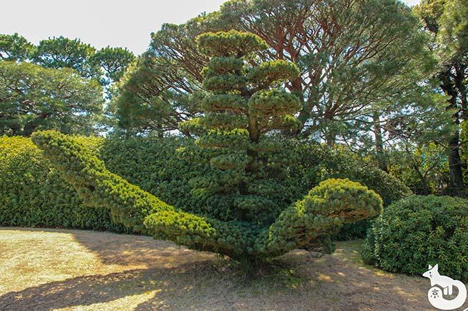 城南宮 しだれ梅と椿まつり|桃山の庭