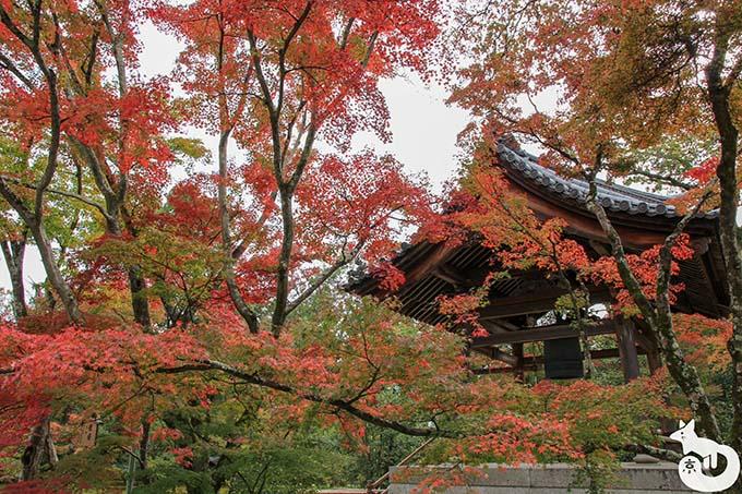 金閣寺 鐘楼の紅葉