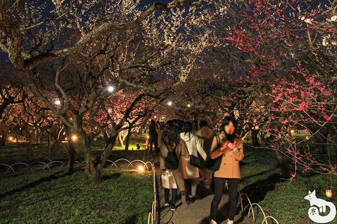 北野天満宮 梅のライトアップ混雑状況 梅苑