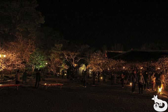 北野天満宮 梅のライトアップ混雑状況 庭園