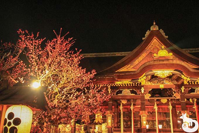 北野天満宮 梅のライトアップ|本殿
