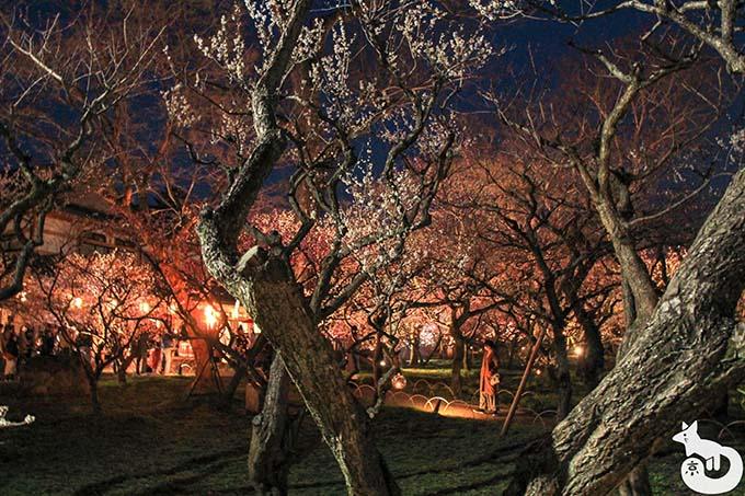 北野天満宮 梅のライトアップ