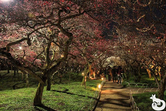 北野天満宮 梅のライトアップ 散策路