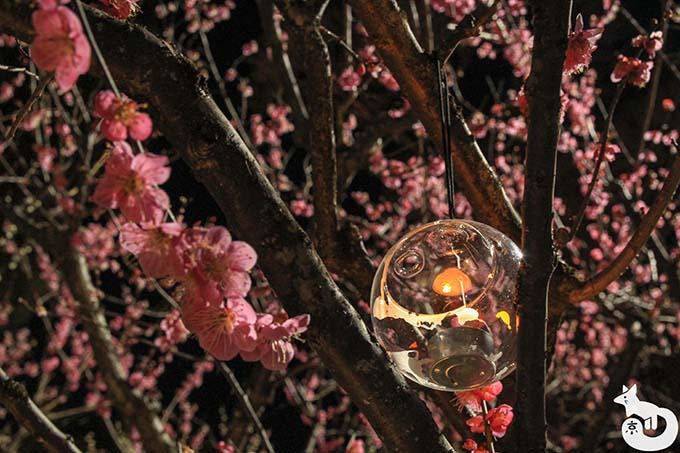 北野天満宮 梅のライトアップ ろうそくの灯りに灯される梅の木