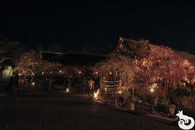 北野天満宮 梅のライトアップ 庭園