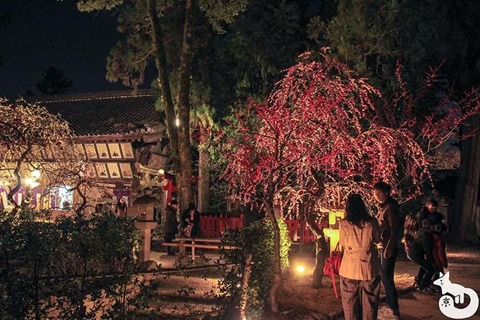 北野天満宮 梅のライトアップ 梅苑入り口にあるしだれ梅