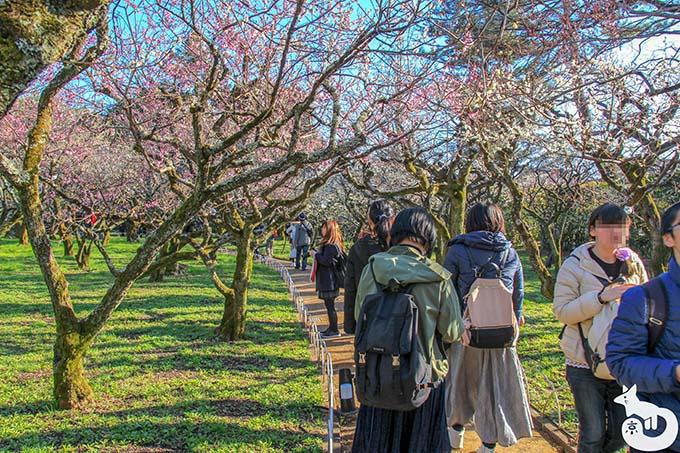 北野天満宮の梅鑑賞|梅苑の梅