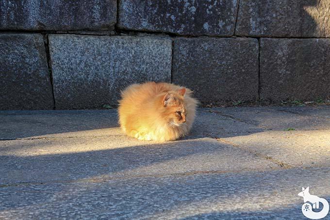 北野天満宮の梅鑑賞|猫