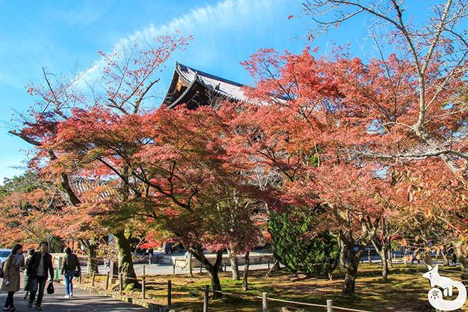 南禅寺 三門周辺の紅葉の写真