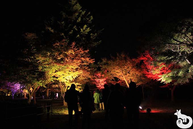 二条城 秋のライトアップ|紅葉のライトアップ