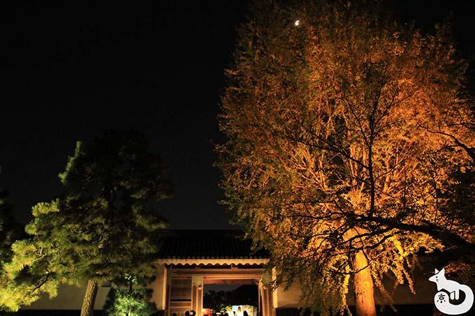 二条城 秋のライトアップ|イチョウのライトアップ
