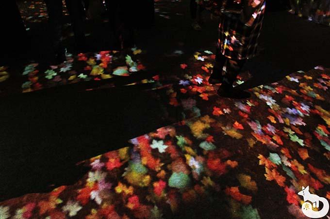 二条城 秋のライトアップ|落ち葉の小径