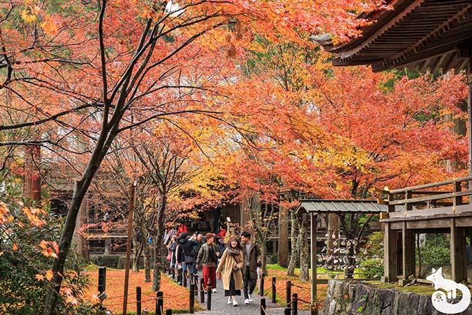 三千院 往生極楽院の紅葉