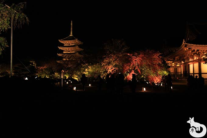 東寺 秋のライトアップ|ライトアップ会場入場