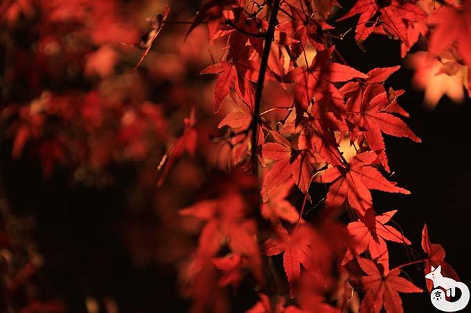 東寺 秋のライトアップ|深紅の紅葉