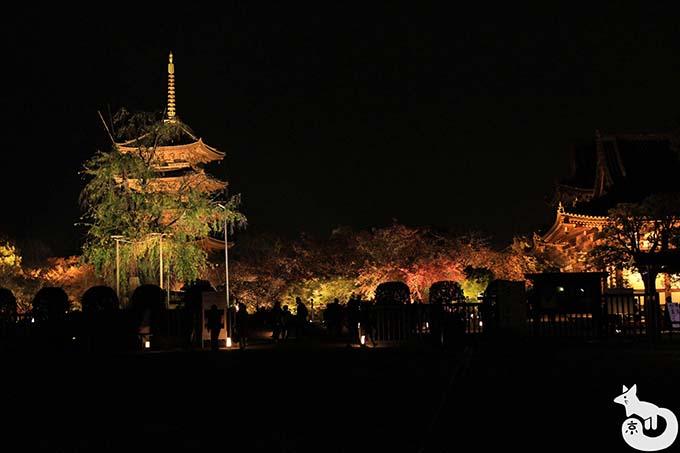 東寺 秋のライトアップ|五重塔と講堂のライトアップ