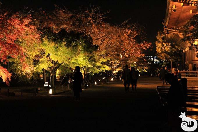 東寺 秋のライトアップ|紅葉のライトアップ
