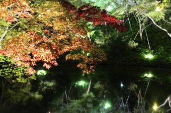 高台寺 夏の夜間特別拝観《ライトアップ》|2018年の開催情報