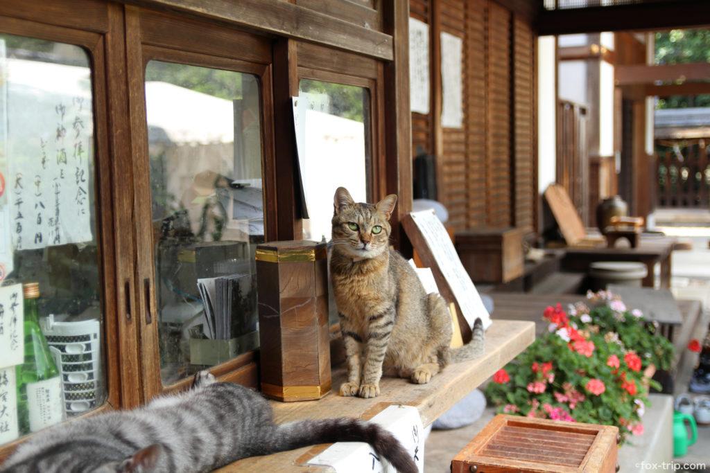 梅宮大社 猫