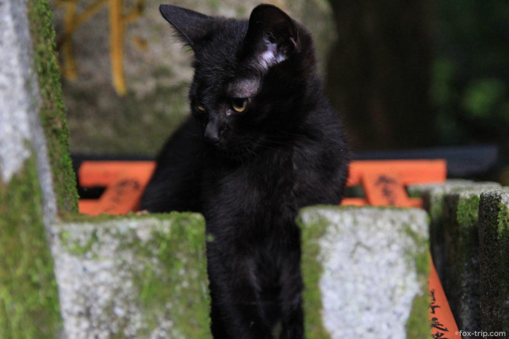 伏見稲荷大社(稲荷山) 猫