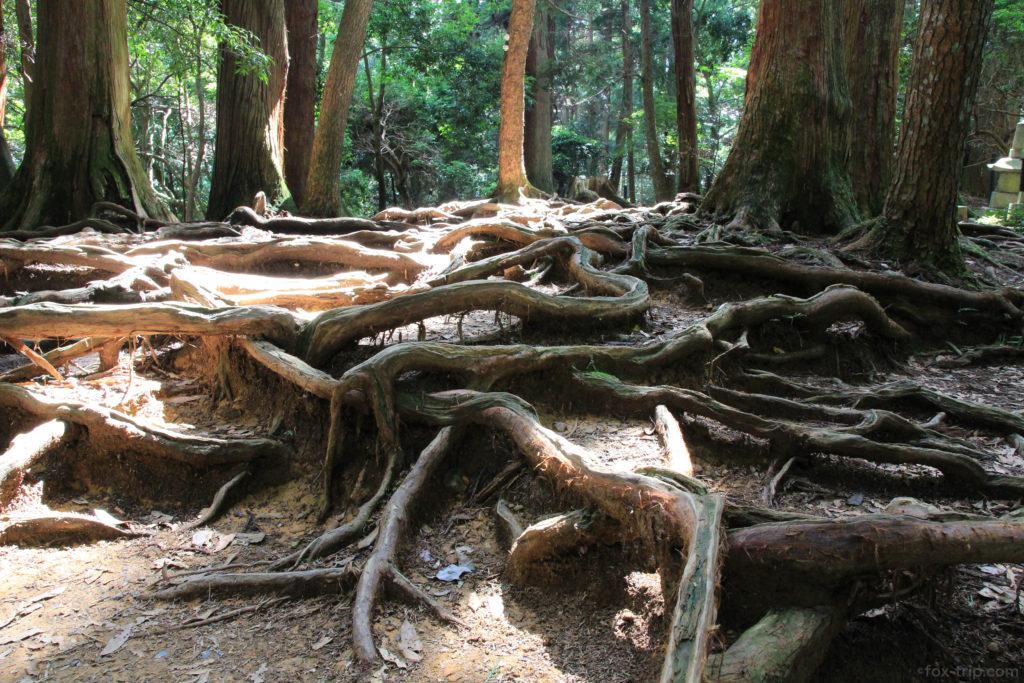 パワースポット 木の根道