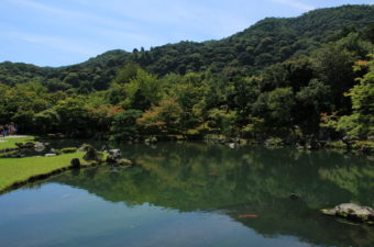 天龍寺の桜情報