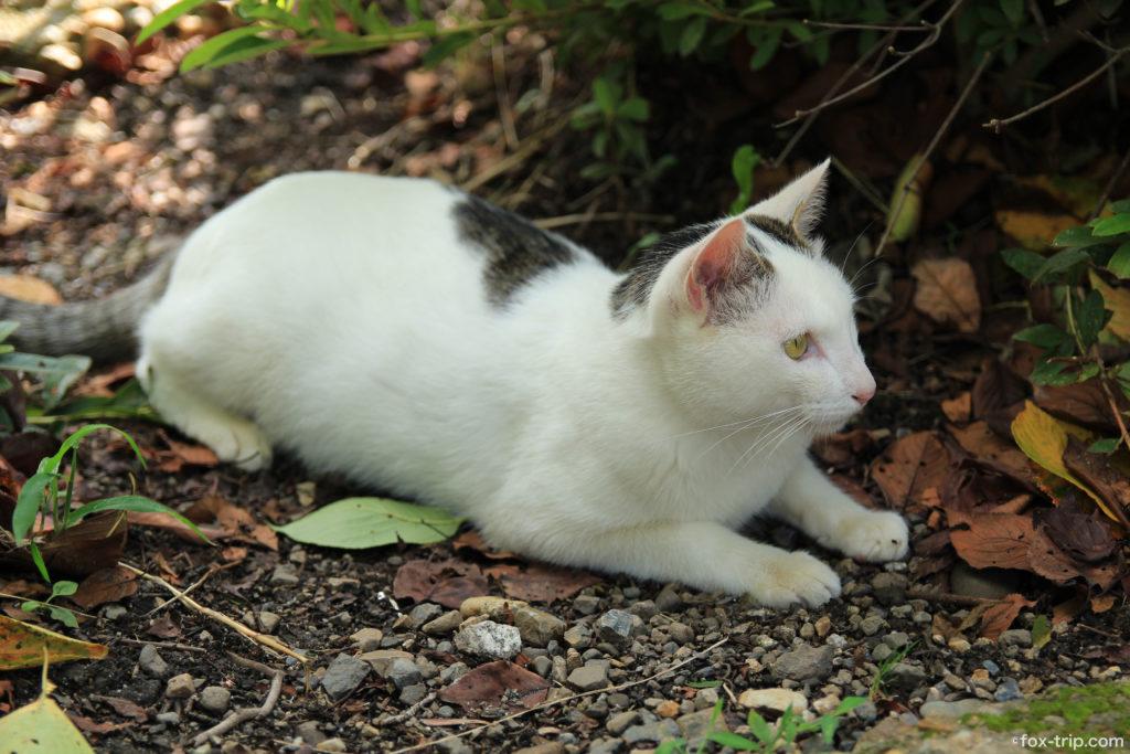 円山公園 猫