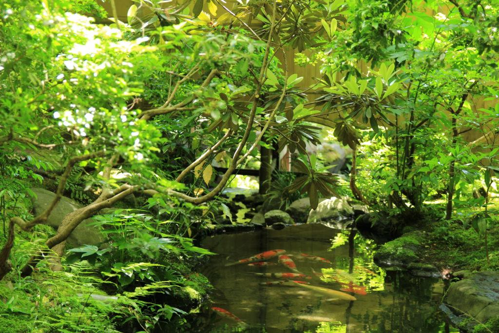 瑠璃光院の池