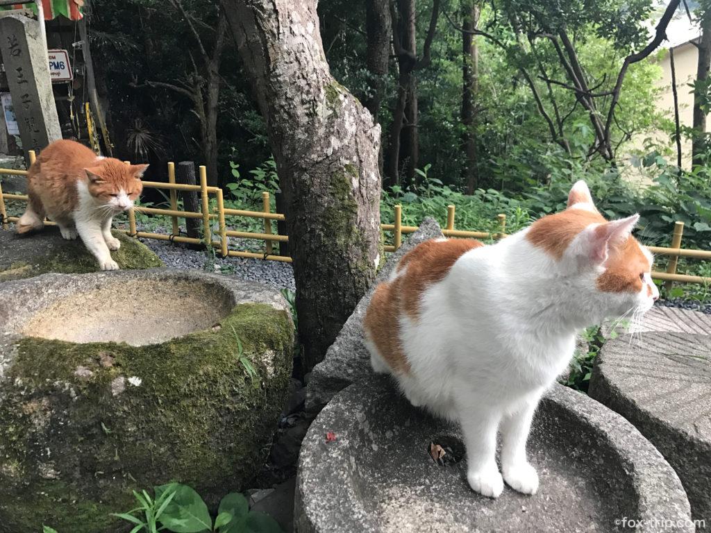 哲学の道 猫