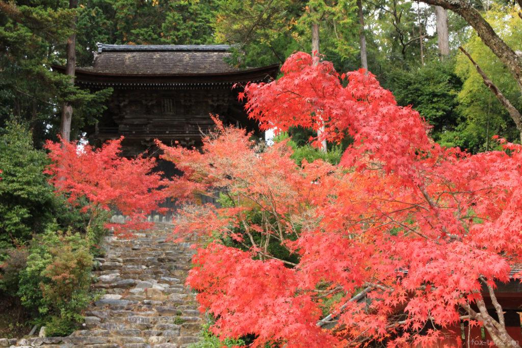 神護寺の紅葉 鐘楼・和気公霊廟前