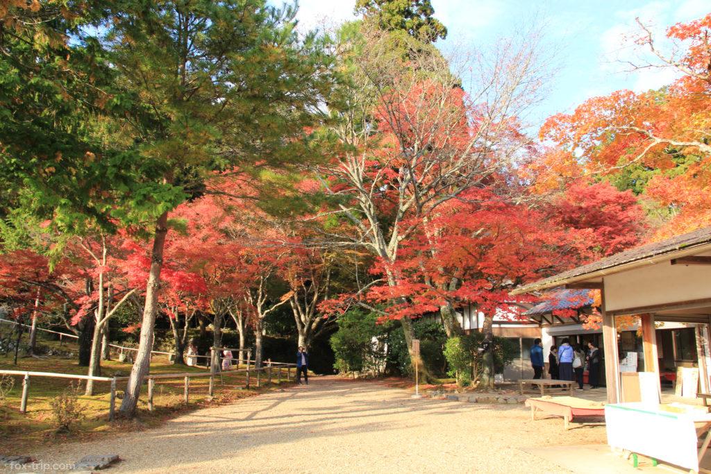 神護寺の紅葉 地蔵院の庭