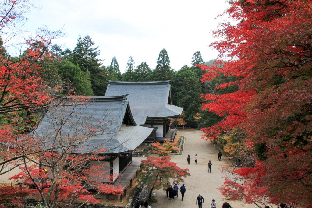 神護寺の紅葉 金堂前の石段