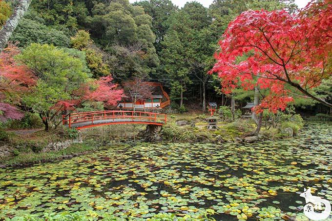 鯉沢池の紅葉